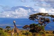 KIlimanjaro + Girafen